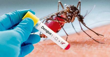 Left or right divulga o dengue