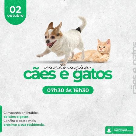 Left or right vacina o c es e gatos nova andradina